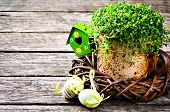 Easter Setting With Green Plant And Decorative Eggs