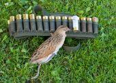 Corn-crake And Ammunition Belt.