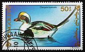 Postage Stamp Mongolia 1991 Long-tailed Duck, Sea Duck
