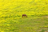 Cropping Springtime Grasses