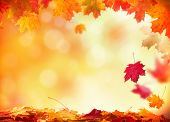 pic of sunny season  - Moody autumn background with falling leaves on wooden planks - JPG
