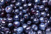 sweet fresh blueberry