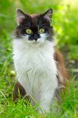 Pretty Cat Or Kitten Sitting In Grass