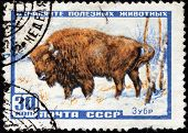 European Bison Stamp