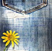 Beautiful Yellow Flowers On Blue Background Old Jeans