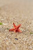 Red Starfish