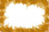 Dry Leaves Frame