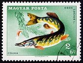 Postage Stamp Hungary 1967 Northern Pike, Fish