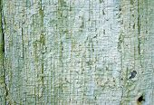 Texture Of Old Wooden Wall With A Faded Green Flaky Paint