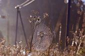 Dewy Summer End Spider-web On Farmland Field