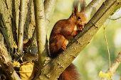 Squirrel b