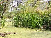 Rushy And Duckweed River