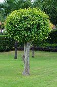 tree on the green garden