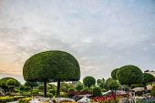 picture of dwarf  - Post a dwarf garden and decorative shapes - JPG