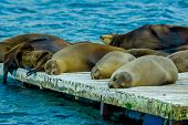 sea lions laying on the dock galapagos islands
