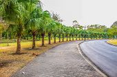 picture of tree lined street  - Tree lined up along at the sidewalk - JPG
