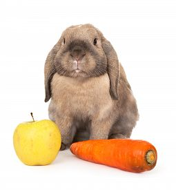 picture of dwarf rabbit  - Dwarf rabbit with carrots and apple - JPG