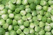 picture of brussels sprouts  - a lot of brussels sprouts for background uses - JPG