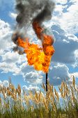 image of torches  - Flame of an oil torch against the sky - JPG