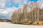 image of birching  - Spring landscape with birch trees and a river covered with ice - JPG