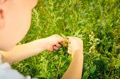 image of ladybug  - Child playing on green meadow examining field flowers looking at ladybug on plants - JPG