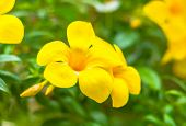 image of yellow orchid  - The beautiful of yellow orchid with natural blur background - JPG