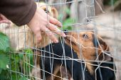 picture of stray dog  - Stray dog behind the corral of a dog refuge and the hand of a girl petting it - JPG