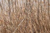 stock photo of tall grass  - Full Frame shot of Tall Brown Grass - JPG