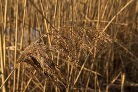 image of dry grass  - Yellow Dried Grass by the River Autumn dry grass background Selective focus - JPG