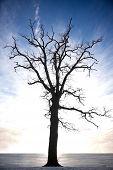 Silueta de árbol desnudo