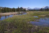 Tuolumne River, Yosemite