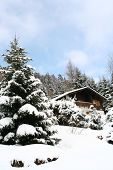 stock photo of winter scene  - winter home with big pine tree and snow background - JPG