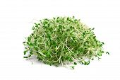 picture of alfalfa  - heap of alfalfa sprouts on white background - JPG