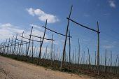 In The Empty Hop Fields Of Kent 1