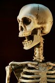 stock photo of head femur  - Scary Halloween skeleton against a black background - JPG