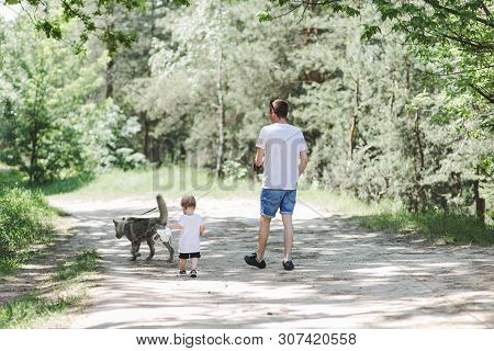 poster of Father And A Little Son Are Walking In The Forest With A Dog.a Dog And A Human.  A Dog Is A Best Fri
