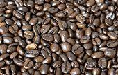 Feld aus Kaffeebohnen