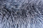 Fur Of Fur-bearing Animals -- Tanned Skins With Wool. Fur -- Mammalian Hair, Protects From Winter Cl poster