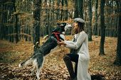 Animal Training. Girl Pretty Stylish Woman Walking With Husky Dog Autumn Forest. Pedigree Dog Concep poster