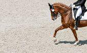 Dressage Horse And Rider In Black Uniform. Horizontal Banner For Website Header Design. Beautiful Ho poster