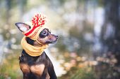 Little Dog In An Autumn Hat And Scarf. Funny, Funny Puppy. Theme Of Autumn, Cold.a Dog In Clothes. T poster