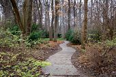 Curved Footpath In Park Of Berlin Germany. Tranquil Landscape With Nobody In Fall Season. Sidewalk T poster