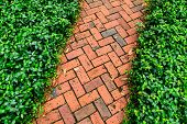 Red Brick Pathway In The Garden