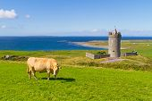 Doonagore castle with Irish cow near Doolin