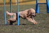 Speedy dog running