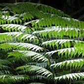 Tree Fern Detail