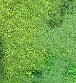 Green Foam Background