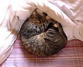 Cat Sleeping On Bed