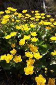 Gelbe Garten