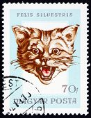Postage Stamp Hungary 1966 Head Of Wildcat